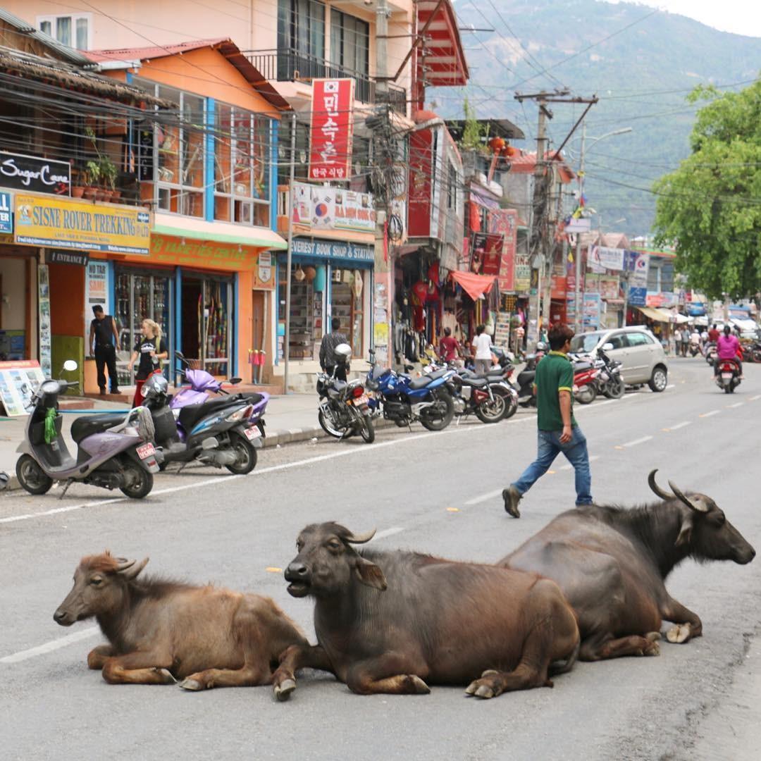 長居したくなる癒しの町!ネパール・ポカラの魅力とは