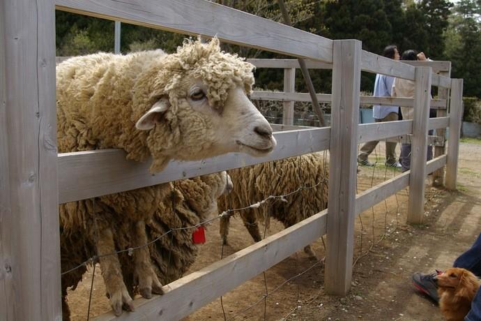埼玉県にある芝桜で人気の羊山公園にはこんな場所もあった!