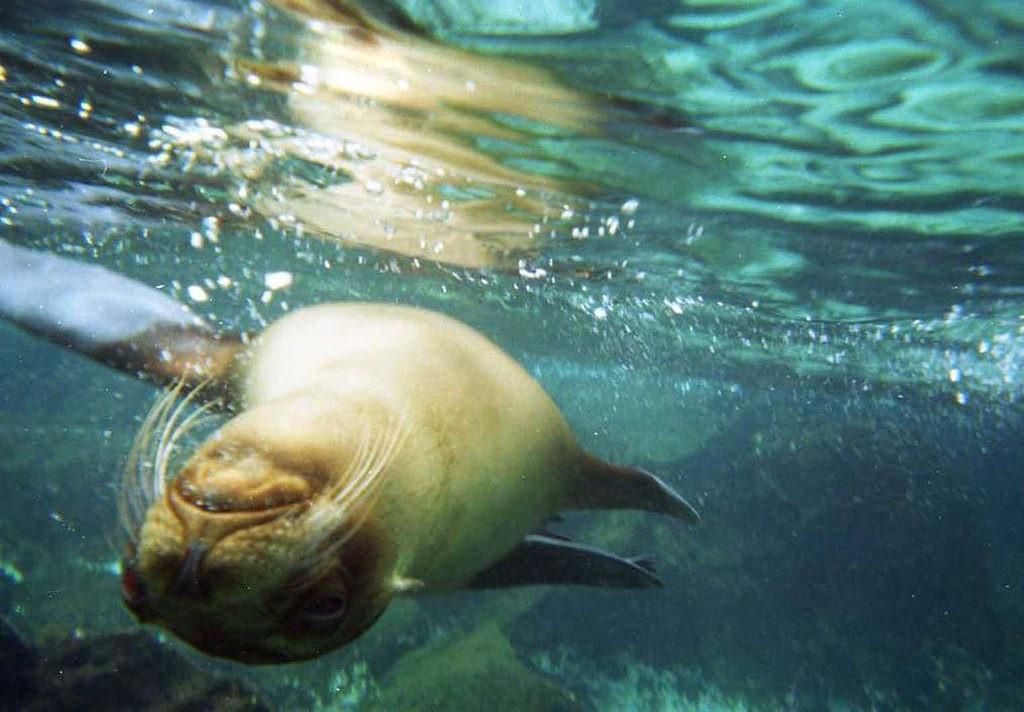 爬虫類好きはたまらない!? ガラパゴス諸島で見ることのできる生き物10選!