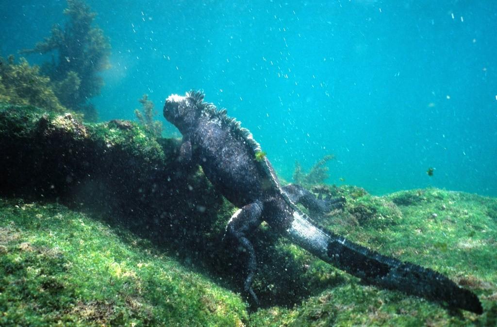 ガラパゴス諸島で超絶かわいい生き物と泳ごう!オススメのビーチ3選