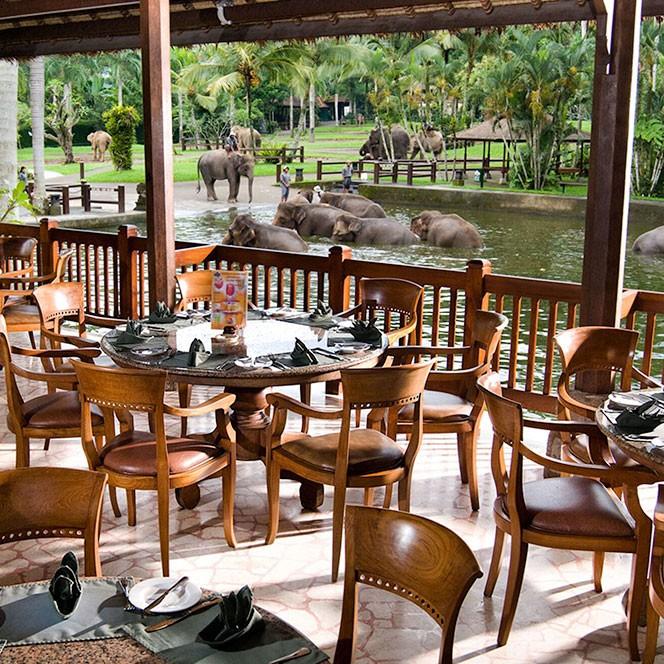 動物好き集合!バリ島で動物たちに囲まれて過ごす特別な休日