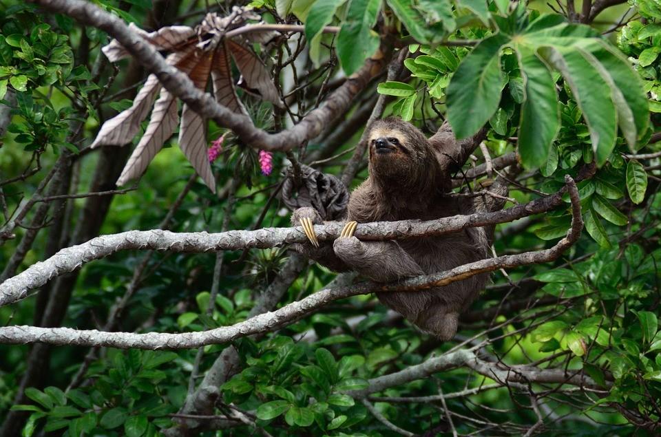 アマゾンのジャングルで出会いたい!ブラジルの貴重な動物たち
