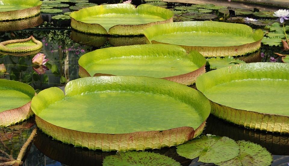 ブラジルのアマゾンに生息する珍しい植物4選