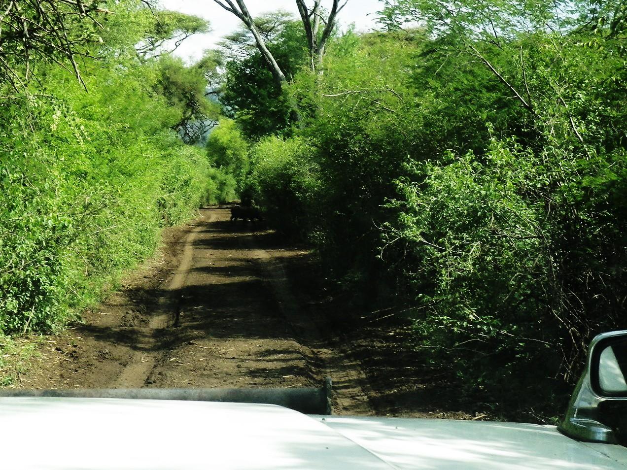 大自然!エチオピアへ野生動物に会いに行こう!
