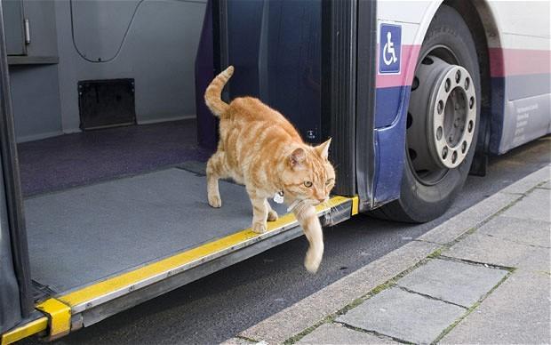 バルト三国間の移動は断然バスがおすすめ!乗り方のコツ教えます
