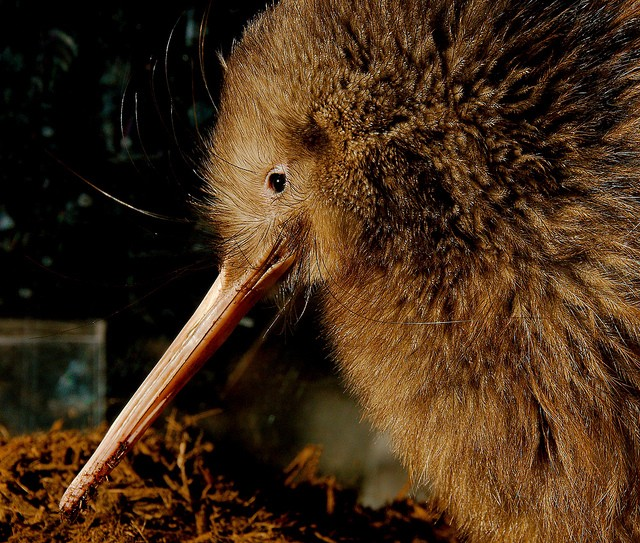 ニュージーランドで本格マオリショー!伝統文化に触れるおすすめの場所4選