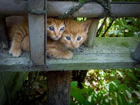 京都の猫の道?人気観光スポット「哲学の道」でかわいいネコに癒されよう