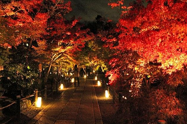 紅葉が美しくて有名な京都の哲学の道ってどんなところ?