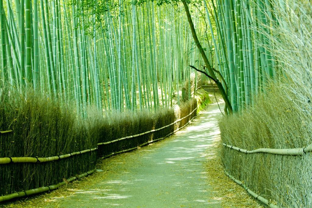 京都嵐山の静ひつな竹林の道、見どころとアクセス途中のお楽しみ