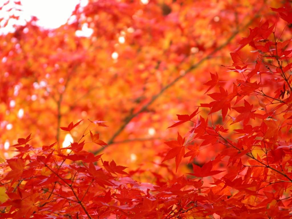 秋の風物詩!都会の中心・新宿御苑で紅葉を見に行こう