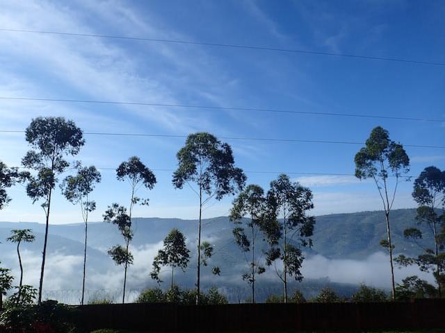 ルワンダ国内シェアNo.1の紅茶「ソルワテ茶」茶畑見学&飲み放題ツアー!