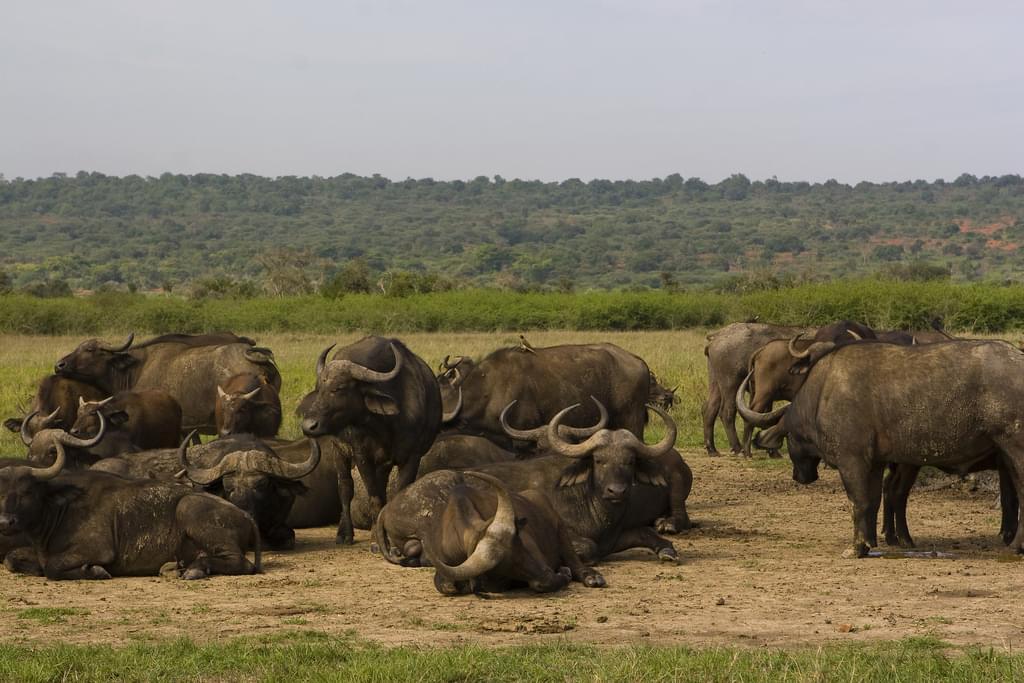 ルワンダのサファリ!アカゲラ国立公園で生きる野生動物&おすすめロッジご紹介