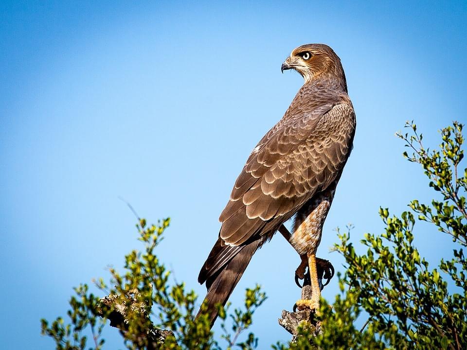 南アフリカで出会いたい野生生物のスポットとは