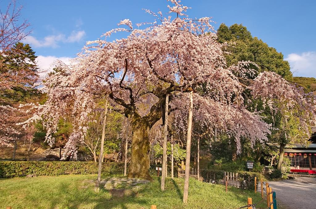 京都・祇園の小路とおすすめ観光名所10選!みどころはココ!