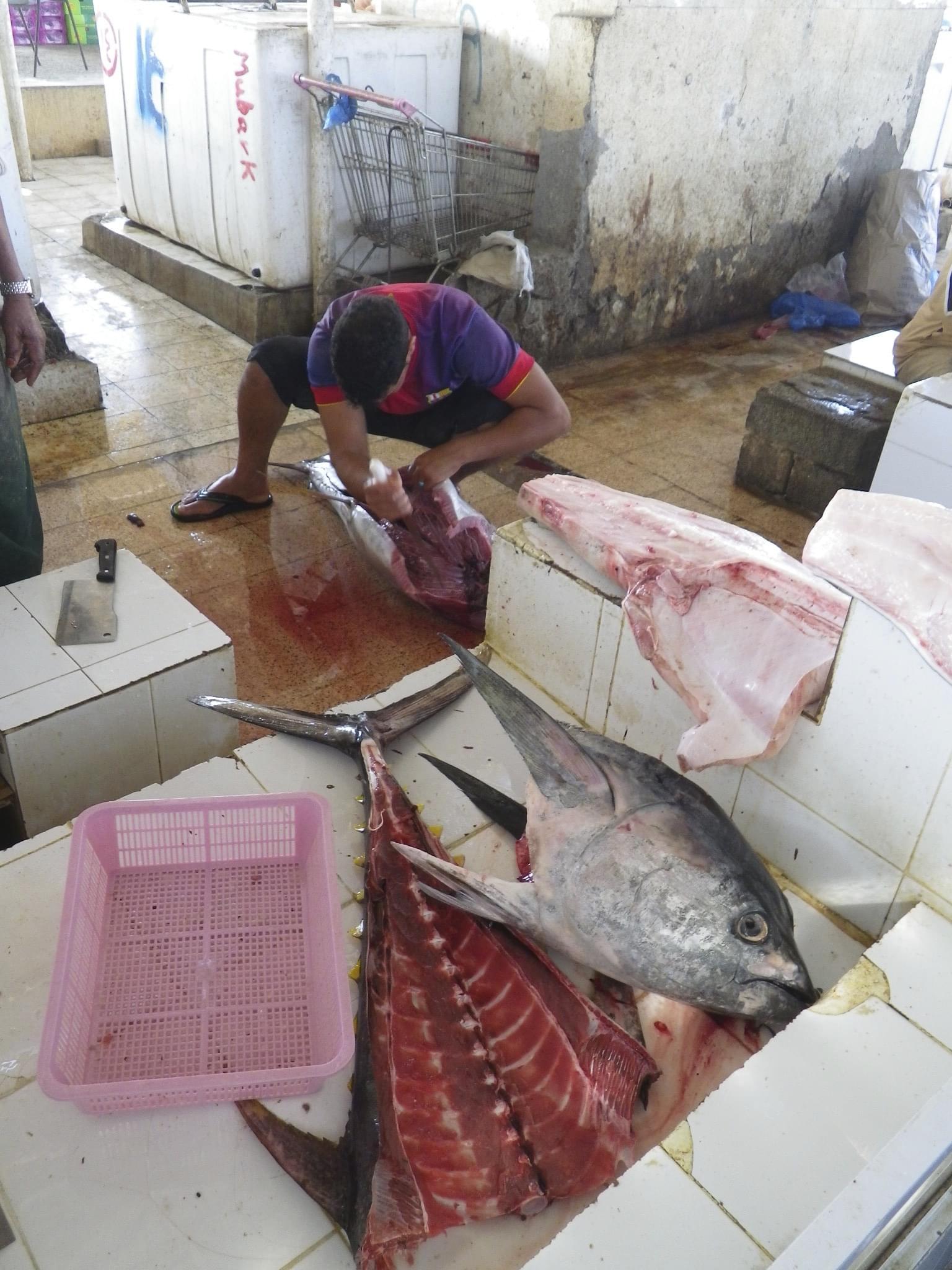 オマーンの田舎町バルカの魚市場が超新鮮でスゴい‼みどころ&アクセス方法紹介!