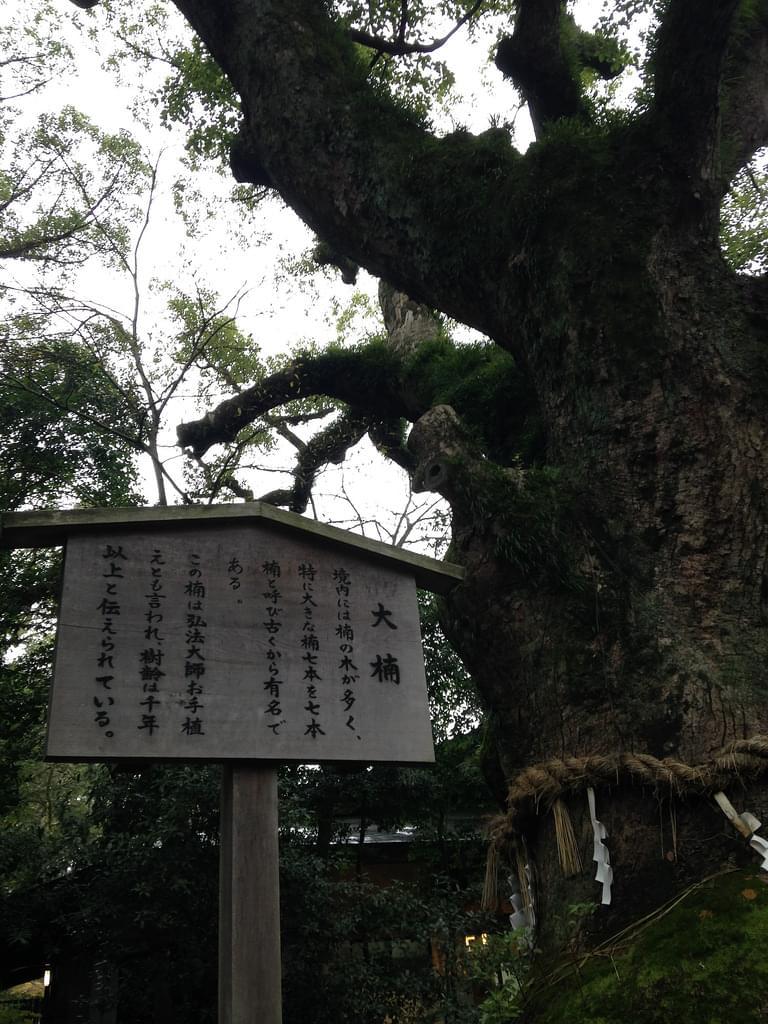 愛知県の観光名所15選!自然いっぱい、家族旅行やデートにぴったりのスポット大特集