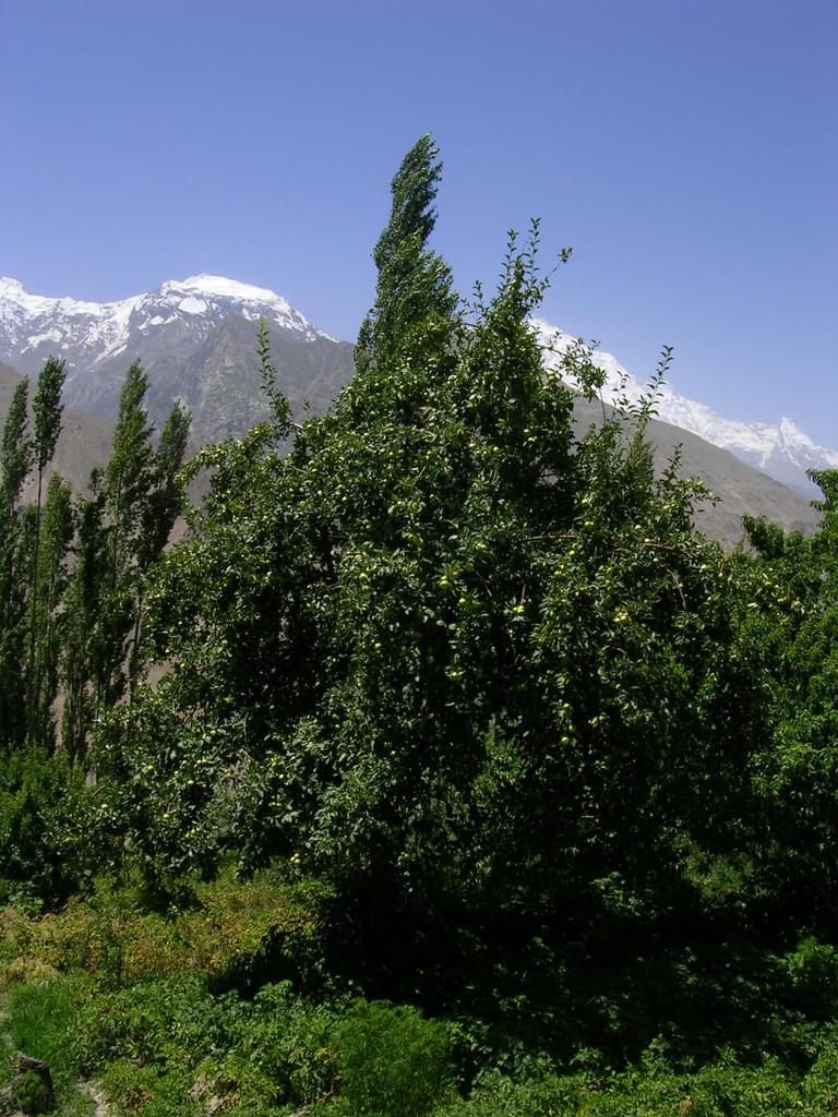 パキスタンの桃源郷・フンザの魅力とは