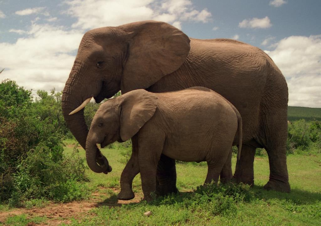 南アフリカのおすすめ観光スポット15選!アフリカの大自然を体感しよう!