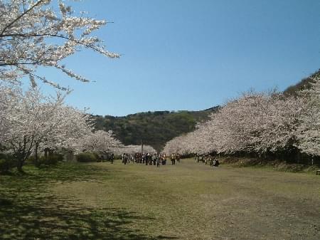 稲取観光おすすめスポット15選~つるし雛・朝市・温泉に三大奇祭の神社まで~