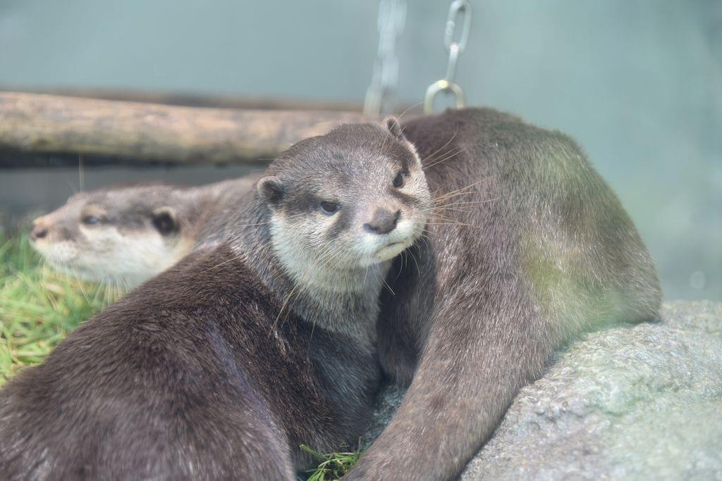サンシャイン水族館で空飛ぶペンギンを見よう!料金・アクセス・割引情報をお届け!