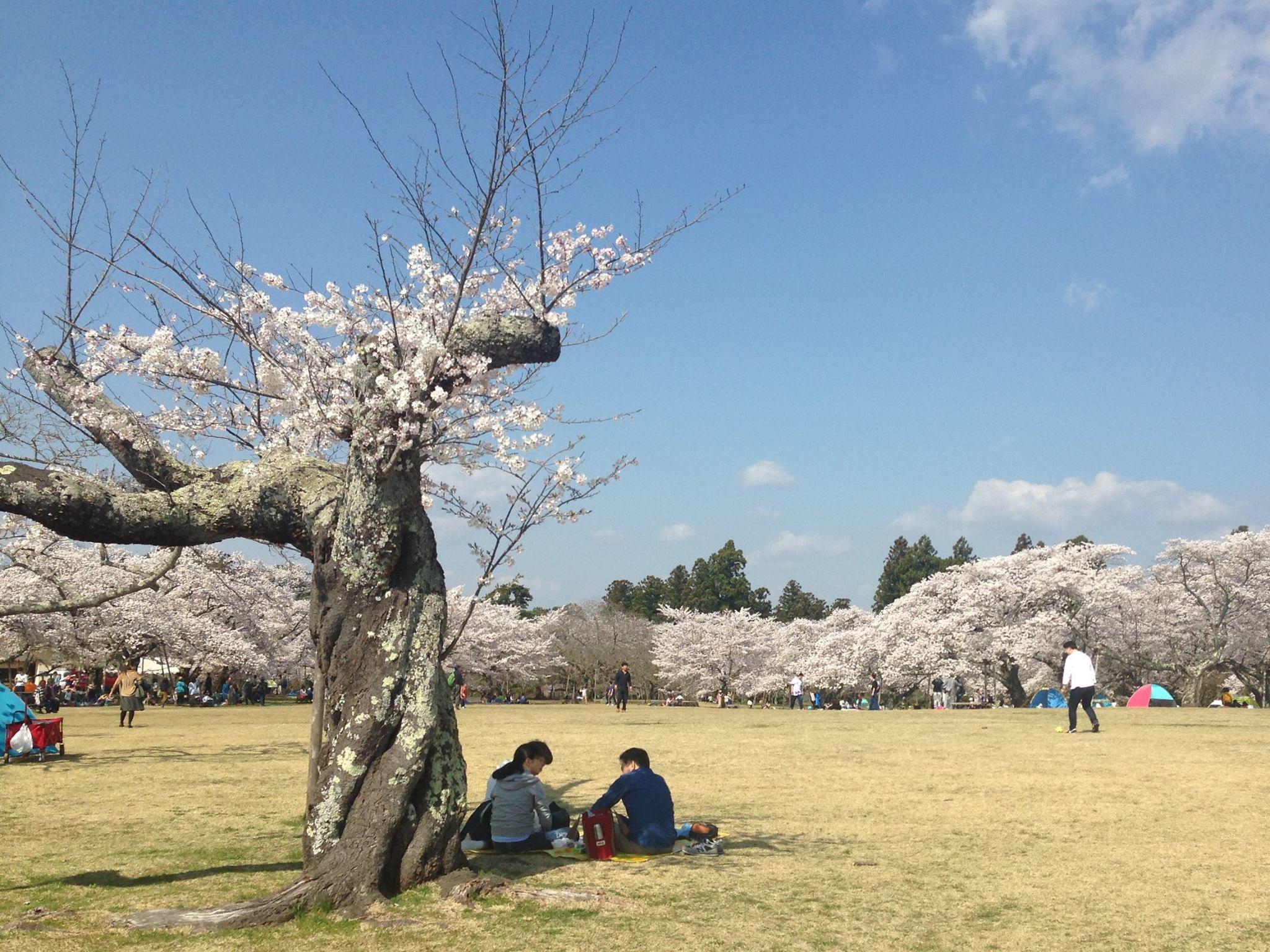 仙台で楽しめる公園TOP10!自然を感じてリフレッシュしよう