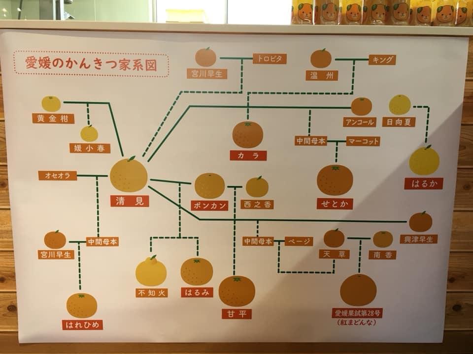 松山で楽しめるB級グルメ20選!地元民のおすすめをご紹介