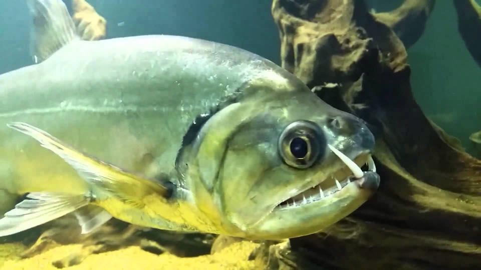 アマゾン川の危険生物15選!これであなたもアマゾン通