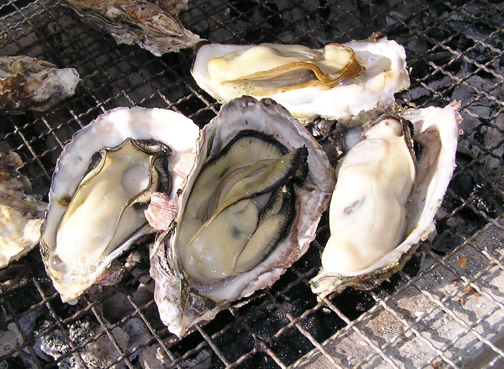 岡山の牡蠣が美味しいお店10選!新鮮な牡蠣を堪能しよう